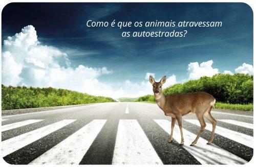 Como é que os animais atravessam as autoestradas